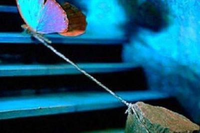 Το σύνδρομο της υπέρβαρης πεταλούδας